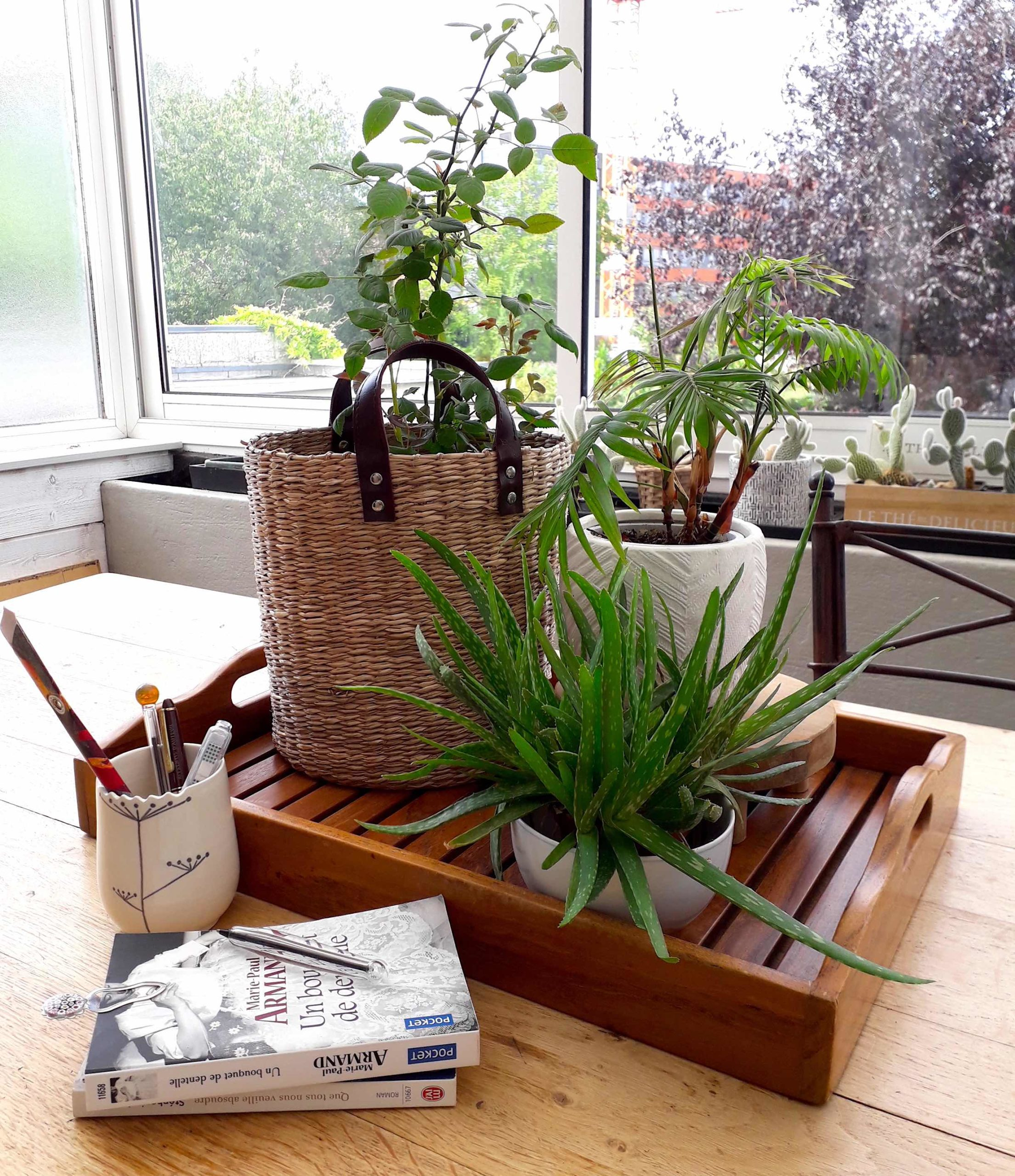plante dans la maison